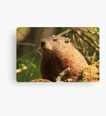 Close Encounter with a Groundhog Canvas Print