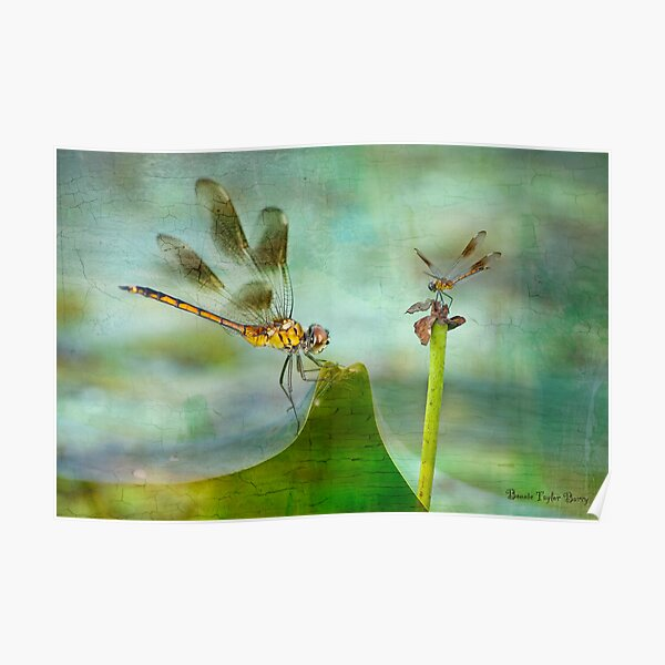 Dragonfly Fantasy Poster