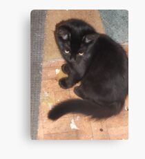 Kitten/looking really cute -(210812)- Digital photo Canvas Print