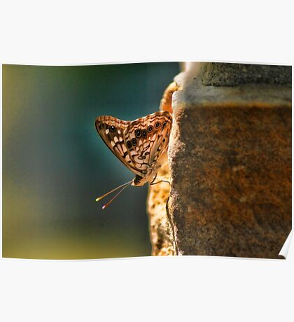 Butterfly Sun Backlight Poster