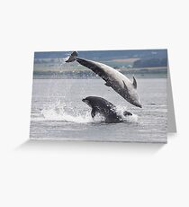 Two Bottlenose Dolphins Jumping Greeting Card