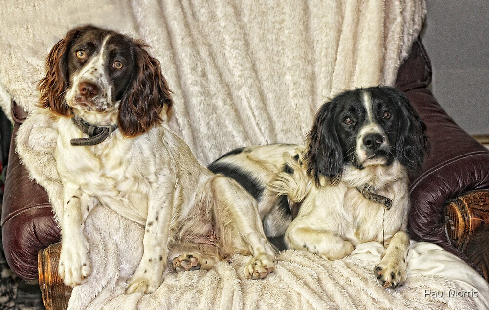 Benson and Jess  by Paul Morris