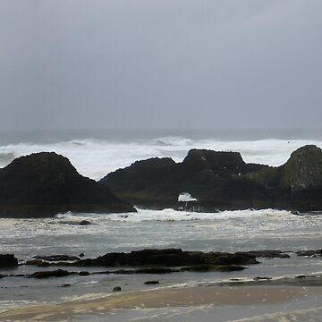 Seal Rocks by GlockGirl40