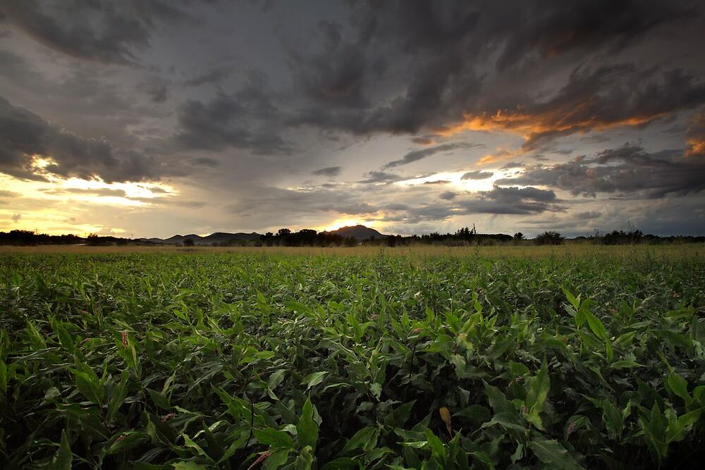Storm Greens by Bob Larson