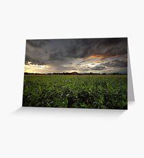 Storm Greens Greeting Card