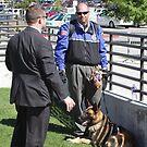 Secret Service Bomb Dog by SB  Sullivan