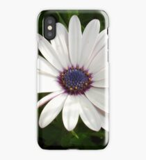 Beautiful Osteospermum White Daisy With Purple Center  iPhone Case