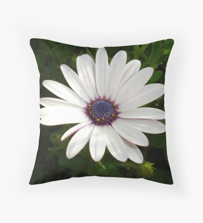 Beautiful Osteospermum White Daisy With Purple Center  Throw Pillow