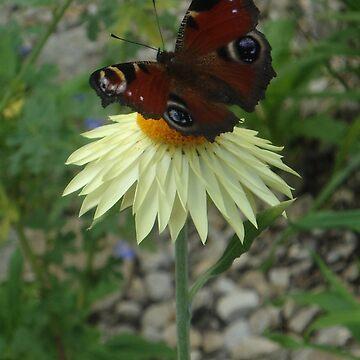 Butterfly Case by Dani3ll3