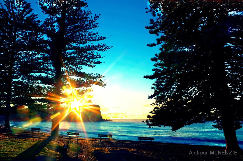 Sunrise between the Pine Trees by Andrew  MCKENZIE