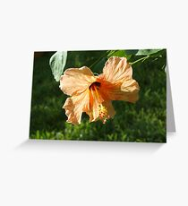 Above the green grass Greeting Card