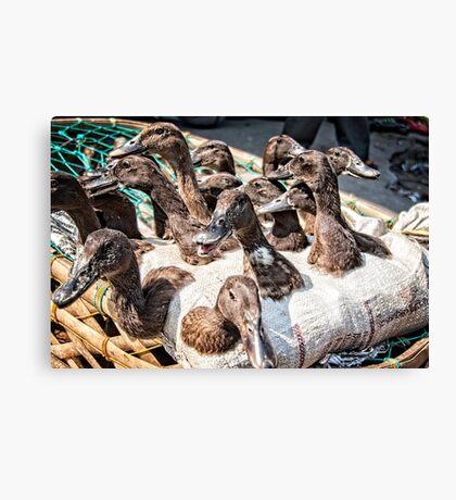 Ducks in a basket Canvas Print