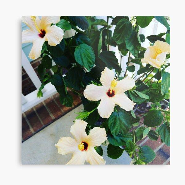 Morning Garden Yellow Hibiscus  Metal Print