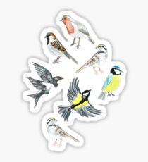Illustrated Birds Sticker