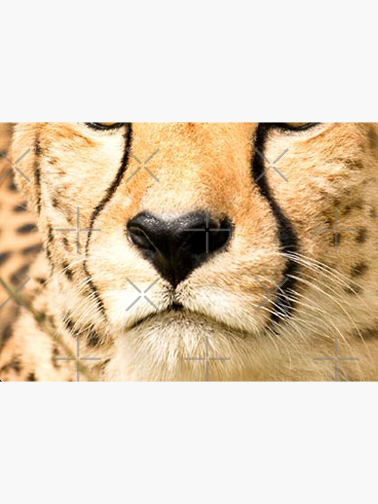 Nose to nose with a cheetah by Foxlindesigns