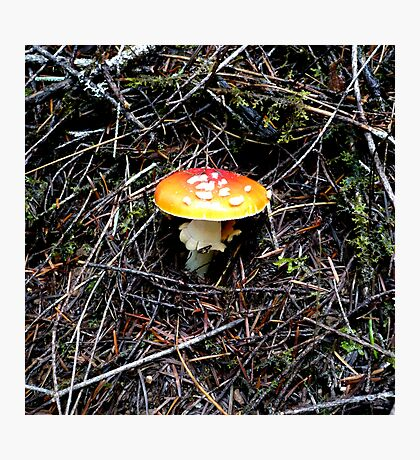 Mushroom (Available in iphone, ipod & ipad cases) Photographic Print