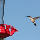 Caught in Flight by DebbieCHayes