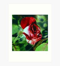 Peppermint Rose - Red Rose Watercolor Painting Art Print