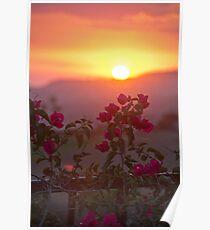 Sunset & Vine  II Poster