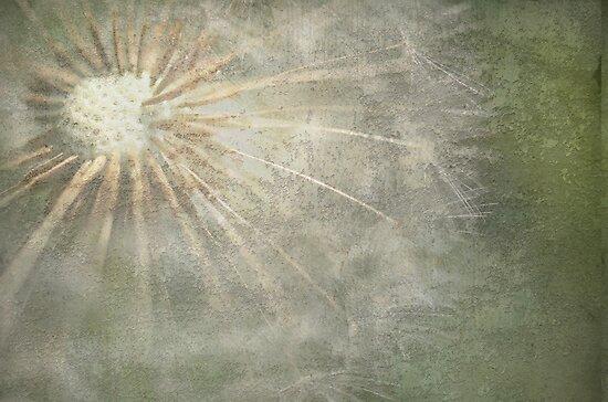 Dandelion by Nicole W.