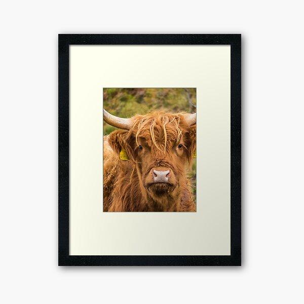 Cheeky Highland Cow Framed Art Print
