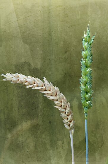 Grains by Nicole W.