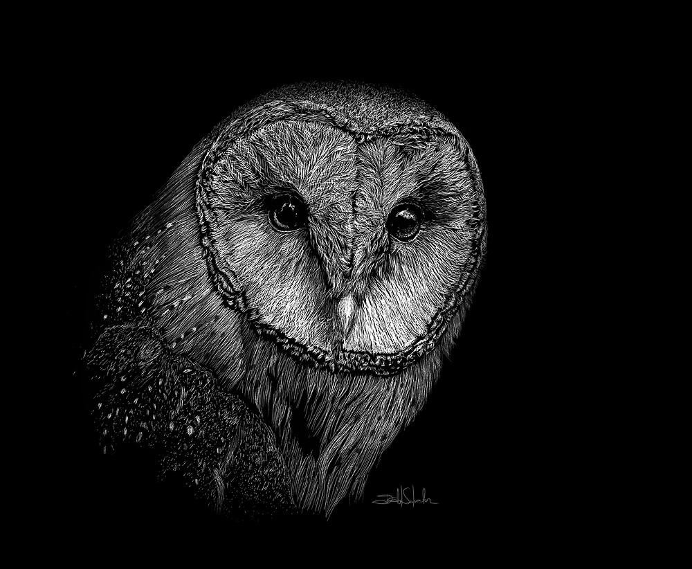 Barn Owl II by IsabelSalvador