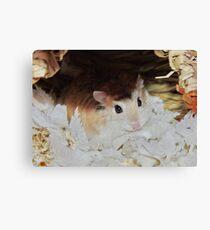 Roborovski Hamster called Cheese Canvas Print