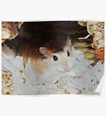 Roborovski Hamster called Cheese Poster