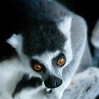 It's a Lemur! by bluetaipan
