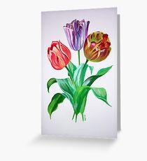 Tulip Trio Greeting Card