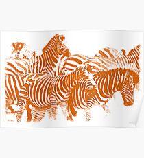 Zebra (Burning Orange) Poster