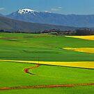 Dassiesfontein by Leon Heyns