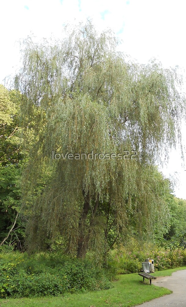 Weeping Willow by loveandroses22