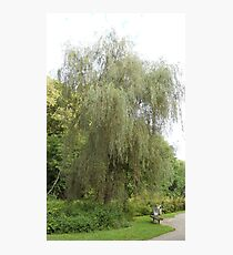 Weeping Willow Photographic Print