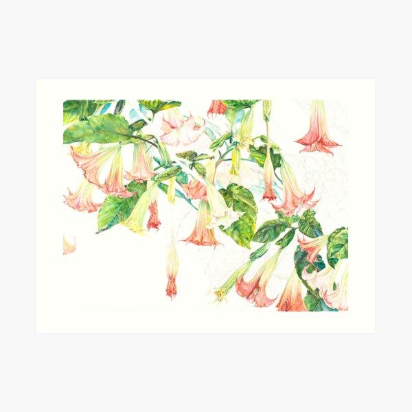 Pink Brugmansia Floral Watercolor Art Print