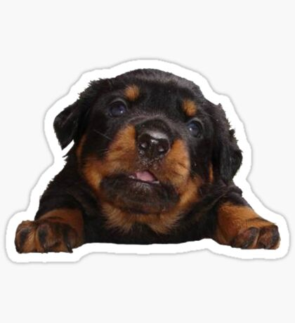 Cute Rottweiler With Tongue Out Isolated Sticker