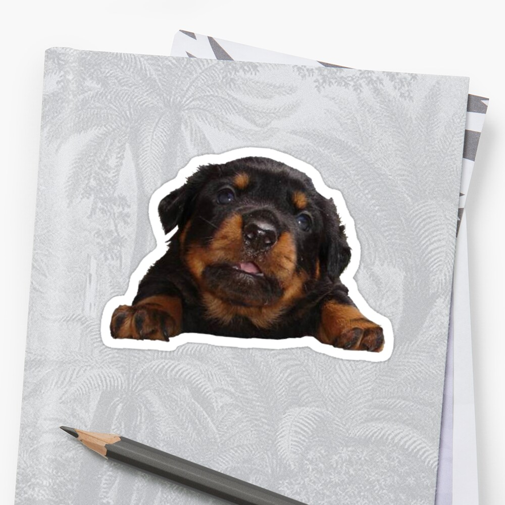 Cute Rottweiler With Tongue Out Isolated by taiche