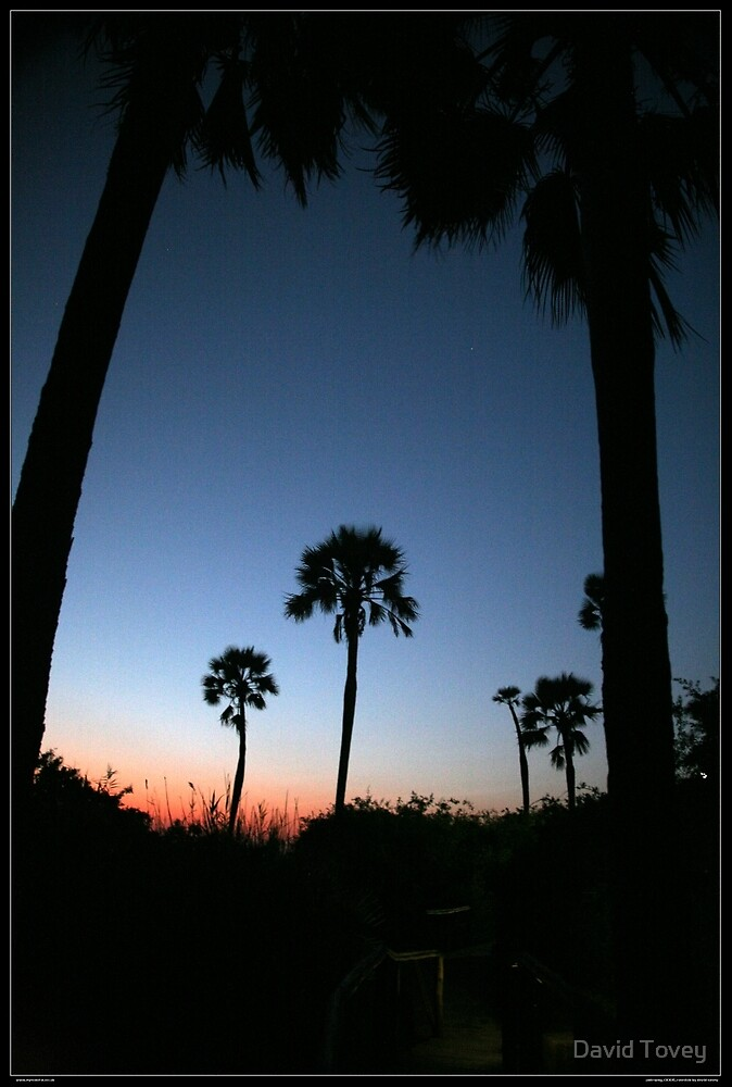 Palmwag Sunset through palm trees by David Tovey