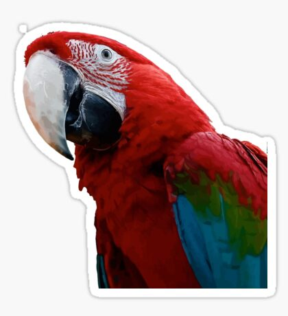 Close-Up Of A Green-Winged Macaw Background Removed Sticker