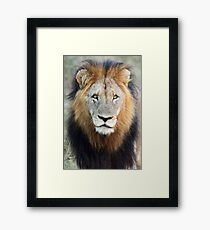 Have you ever seen a mane like this!! Framed Print