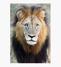 Have you ever seen a mane like this!! Photographic Print