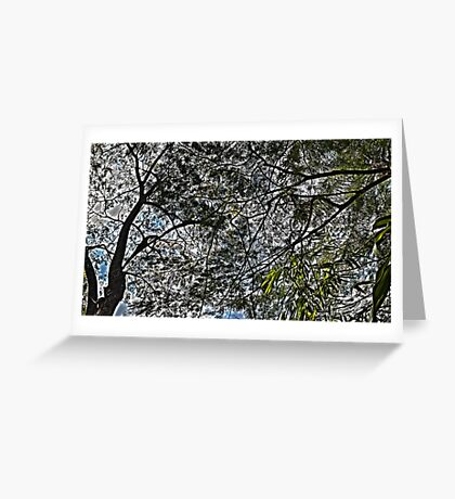 Dappled Sunlight Greeting Card