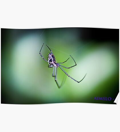 Silver Orb Spider Poster