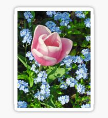 Pink Tulp and Forget-me-not [Photo] Sticker