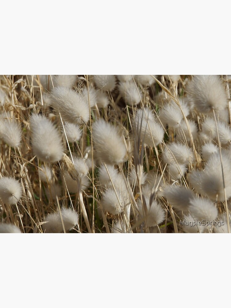 Fluff and Stuff - Magpie Springs - Adelaide Hills - Fleurieu Peninsula - South Australia, by Avril Thomas by MagpieSprings