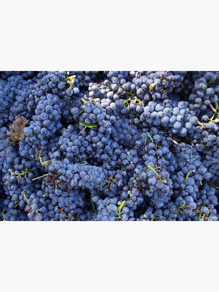 Pinot Noir  - Magpie Springs - Adelaide Hills Wine Region - Fleurieu Peninsula - Winery by MagpieSprings