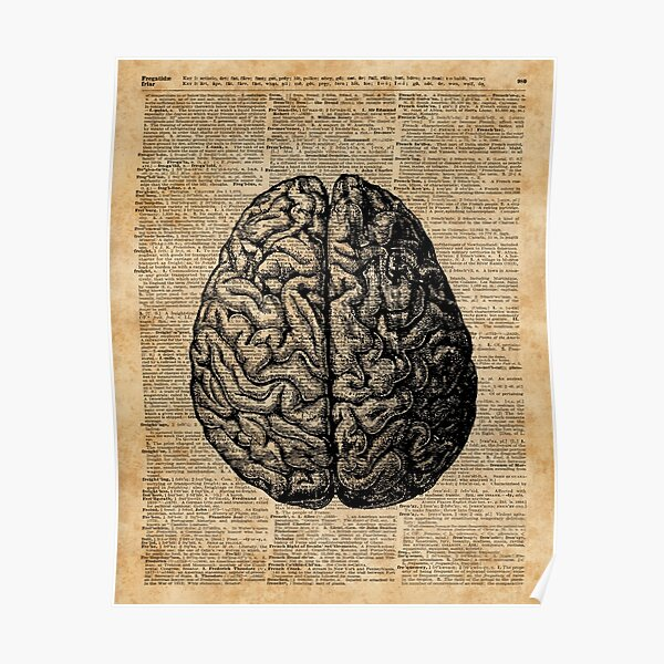 Vintage Anatomía Humana Cerebro Ilustración Diccionario Libro Página Arte Póster