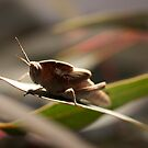 Toad Hopper by David Toolan