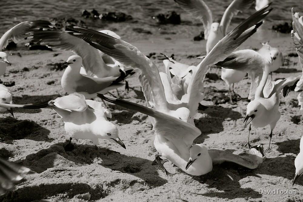 Sea Gulls by David Toolan
